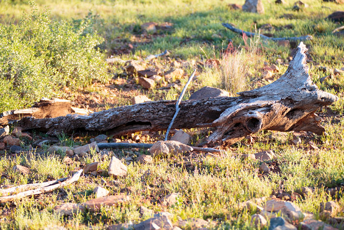 Picturesque dry log